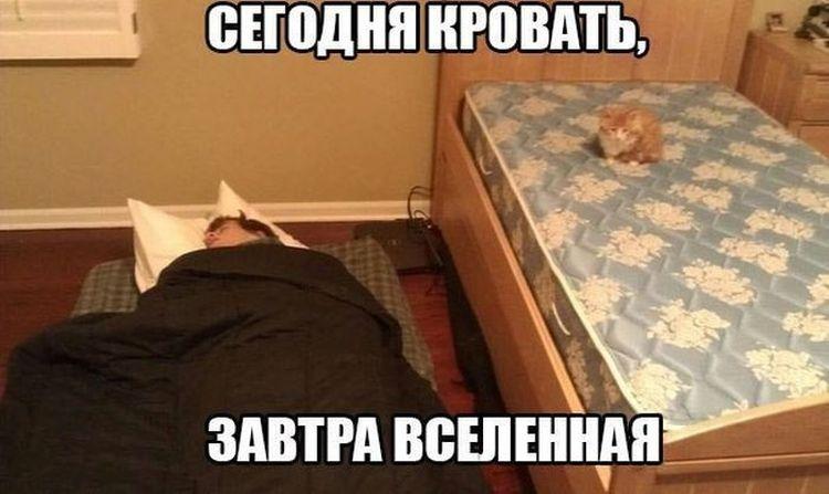 кот спит на кровати рядом хозяин на полу. Надпись сегодня кровать завтра вселенная