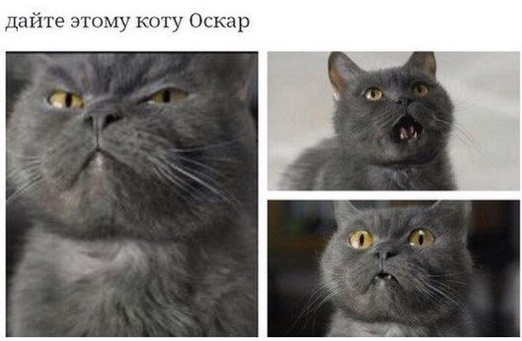 кот с разным выражением морды