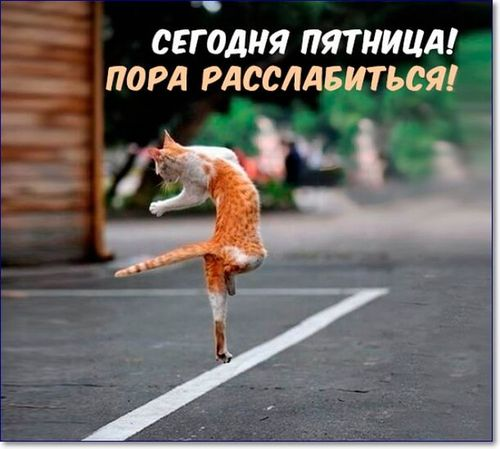 кот танцует пятница
