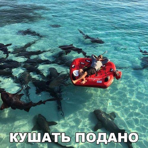 акулы и человек на надувном матрасе кушать подано