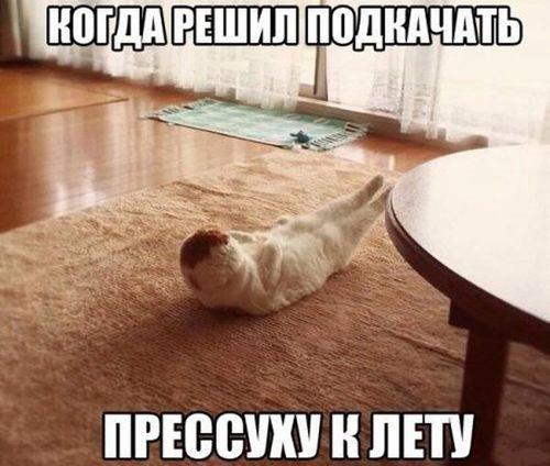 кот качается когда решил подкачать прессуху к лету