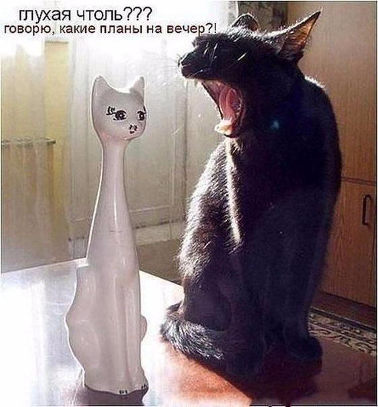 кот и фарфоровая кошка глухая чтоль какие планы на вечер
