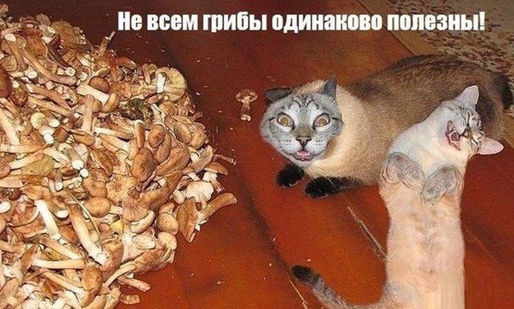 кошки грибы не всем грибы одинаково полезны