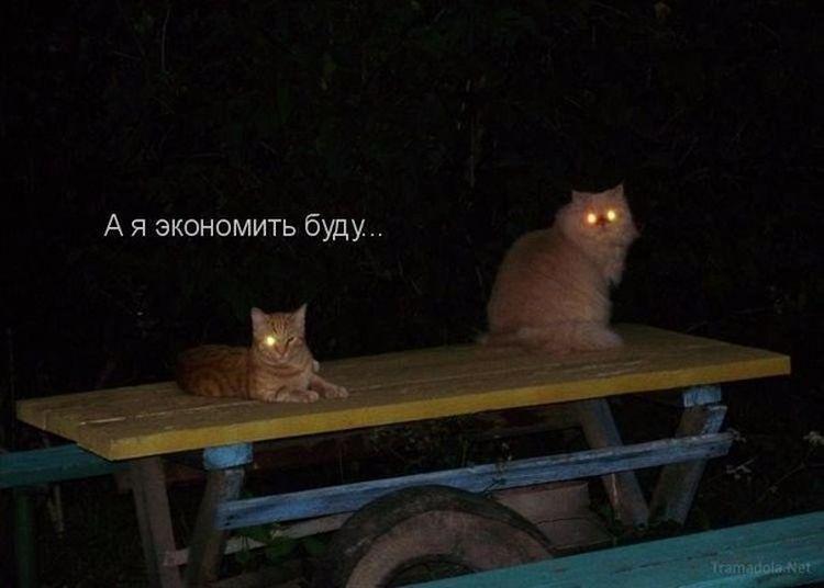 коты со светящимися глазами