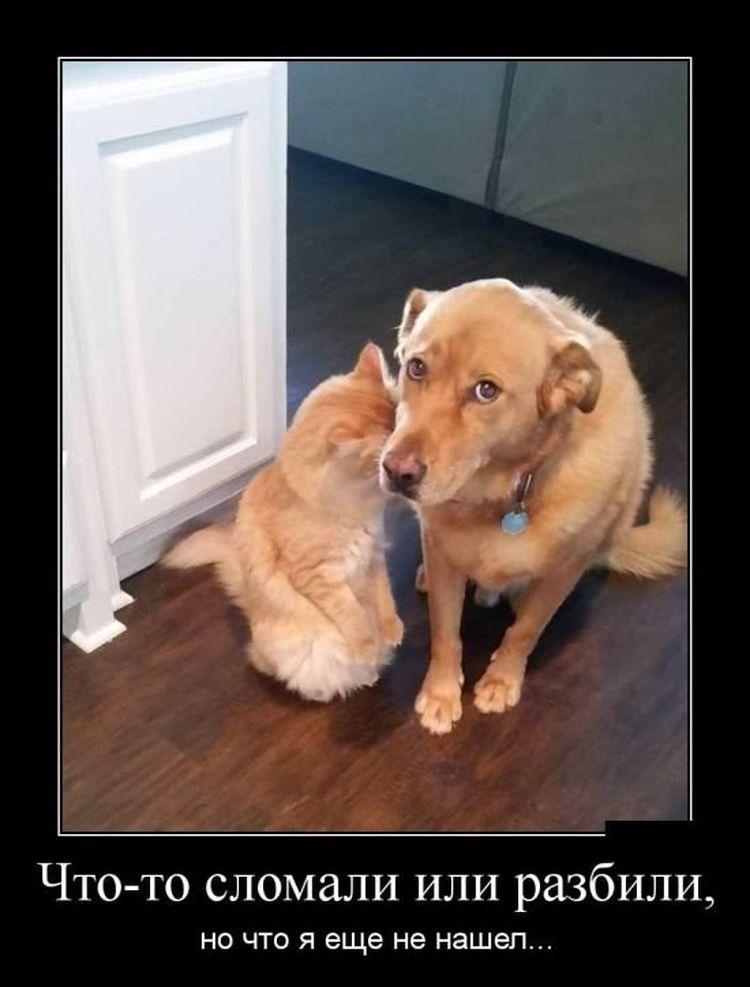 кошка и собаки виноватые