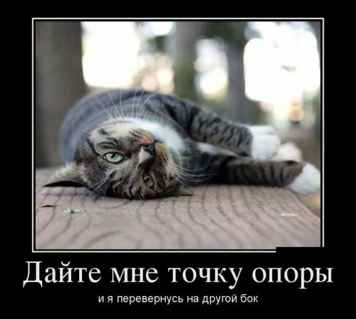 ленивый кот лежит