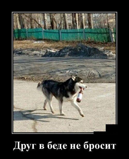 собака с бутылкой в пасти