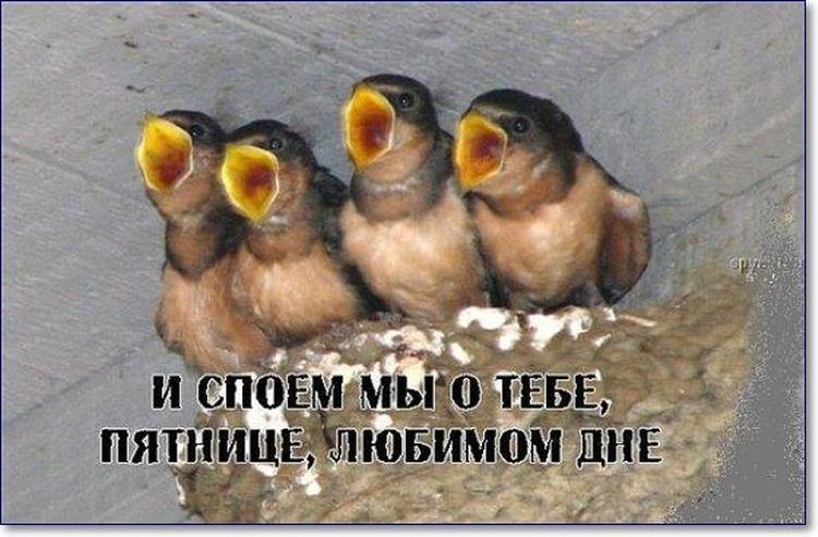птенцы пищат