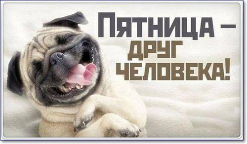 собака улыбается пятница друг человека