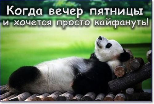 панда отдыхает пятница
