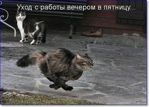 кот летит пятница
