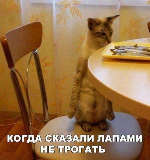 кот стол рыба