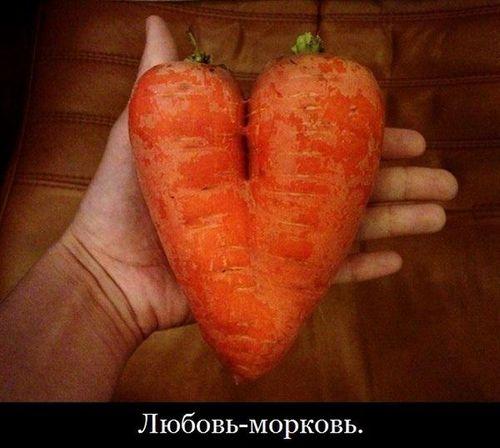 морковь в форме сердца любовь-морковь