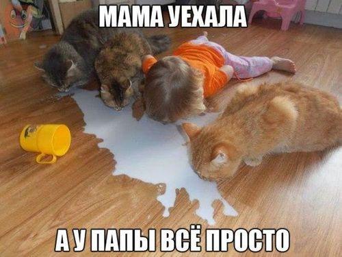 ребенок пьет молоко с пола с кошками мама уехала а у папы все просто