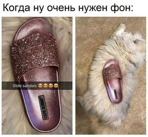 кот и тапок