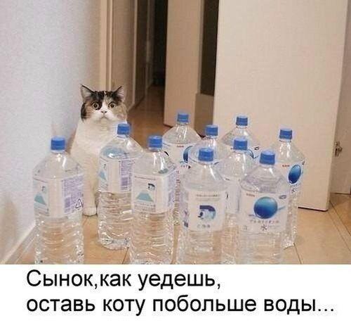 кот бутылки с водой