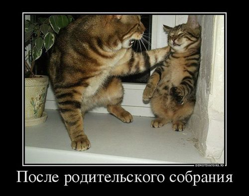 кошка котенок