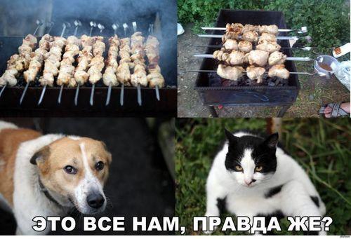 кот и собака и шашлык