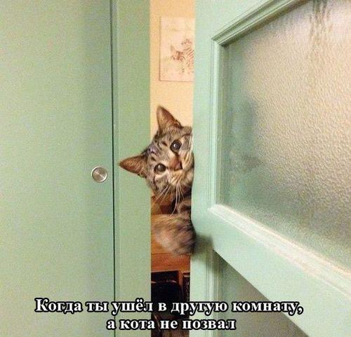 любопытный кот за дверью