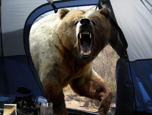 медведь в палатке