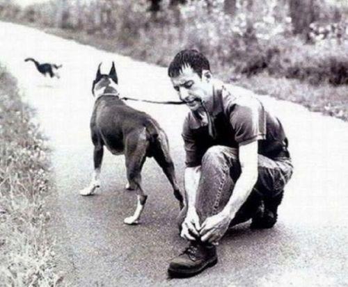 собака за кошкой