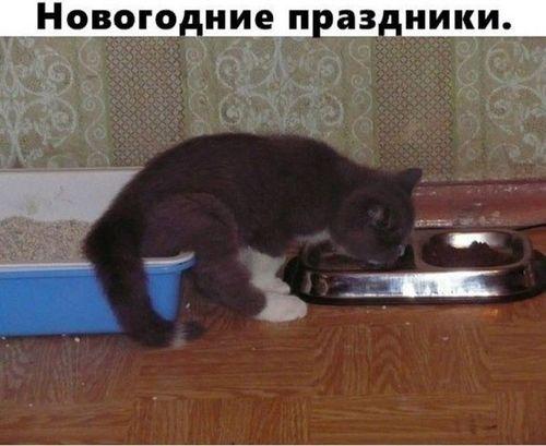 кот в туалете и ест из миски