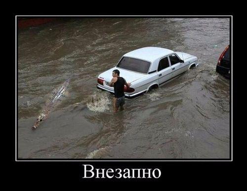 машина в воде проплывает крокодил
