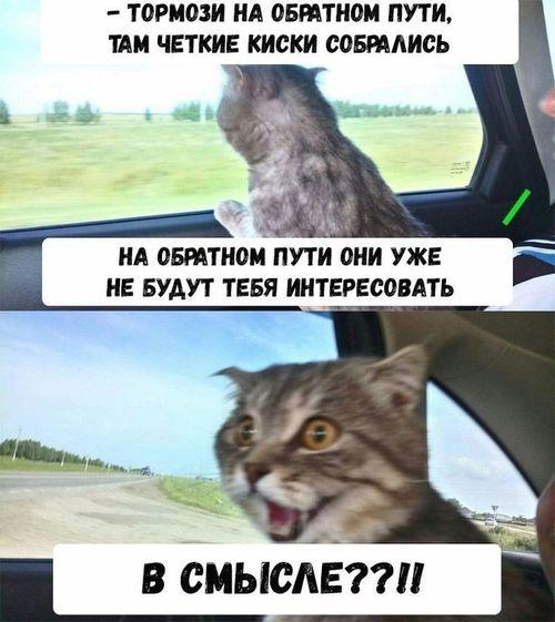 кота везут на кастрацию