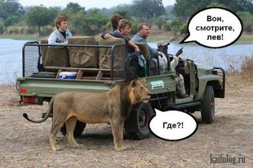люди на сафари и лев