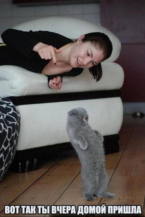 кот на задних лапах и девушка