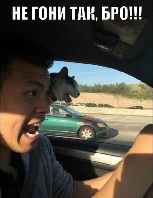 кот в машине орет не гони так бро