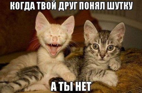 друг понял шутку а ты нет котята