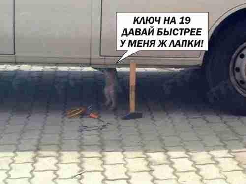 кот чинит машину