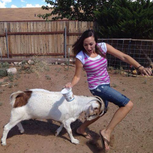 козел бодает девушку